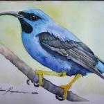 Une nouvelle série d'oiseaux